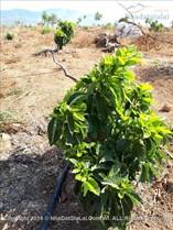 Chư pưh: Bán đất trồng cây ăn quả